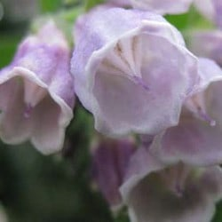 Natural skincare products with comfrey - Angela Langford Skincare