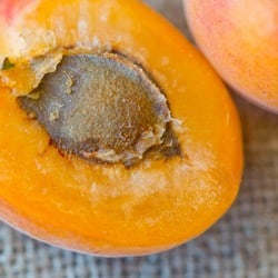 Natural skincare products with apricots - Angela Langford Skincare