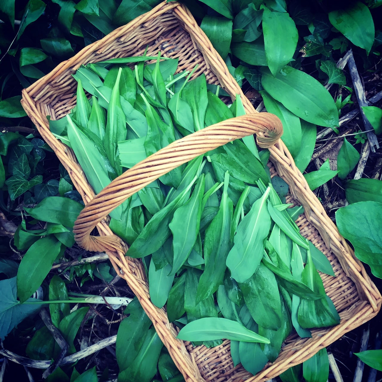 wild garlic recipe by Angela Langford Skincare